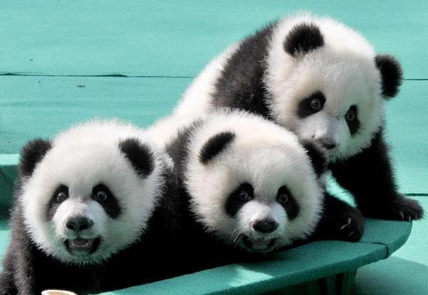 Hello Mengmeng, Shuaishuai and Kuku!:null