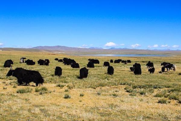 Picturesque scenery of Tibet:null