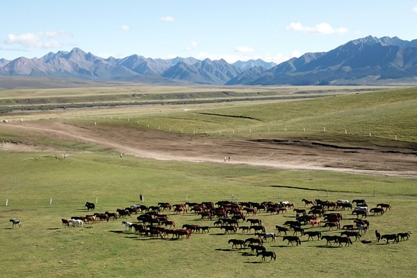 Beautiful scenery of Shandan horse ranch in NW China's Gansu:null