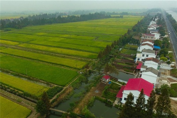 View of paddy fields in Yiyang, C China's Hunan:null