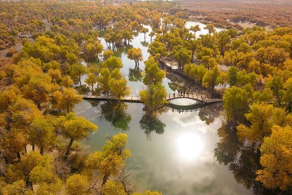 Populus euphratica forest in Inner Mongolia:null