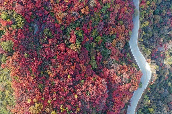 Red leaves of Changshou Mountain in Zhulin, C China's Henan:null