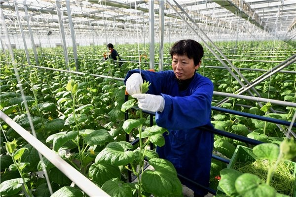 Nanhe county optimizes agricultural industry structure to boost rural economy:null