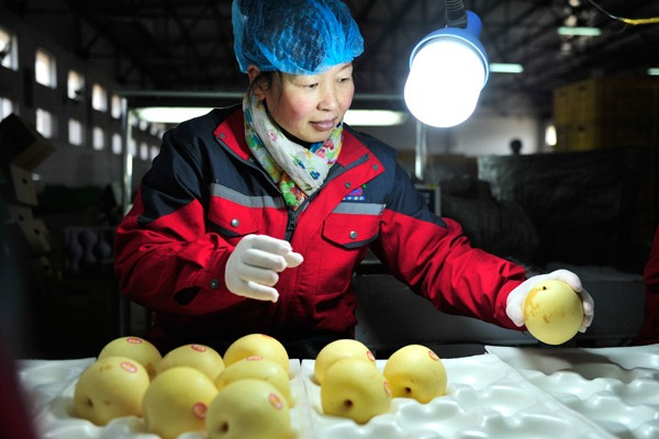 Chinese pears first exported to Brazil:null