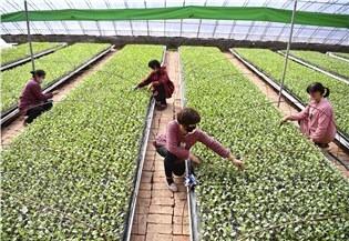 China to further ensure farm produce supply amid epidemic:0