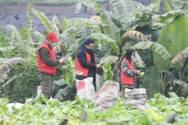 Volunteers help locals in need amid novel coronavirus fight:null