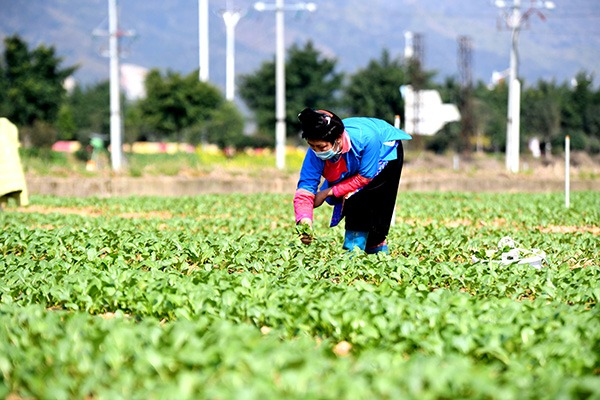 Farmers across China carry out agricultural production as weather warms up:null