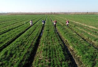 Spring plowing, farming preparations urged:2