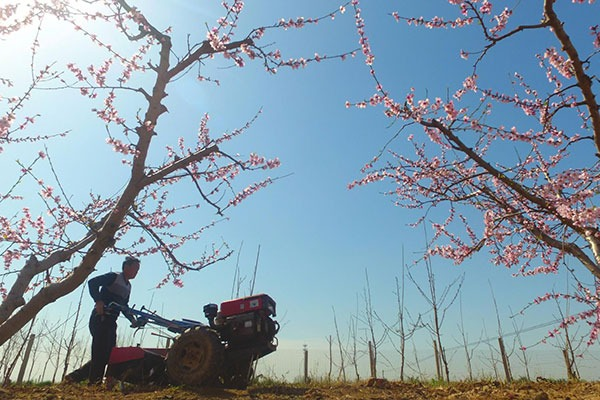 Farmers work in fields across China:null