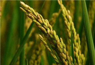 Govt passes regulation on prevention of crop diseases, insect pests:0