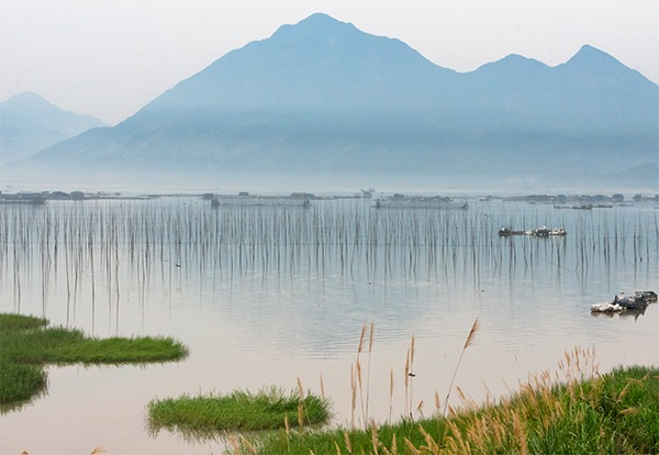 China's marine ecology improves substantially:0